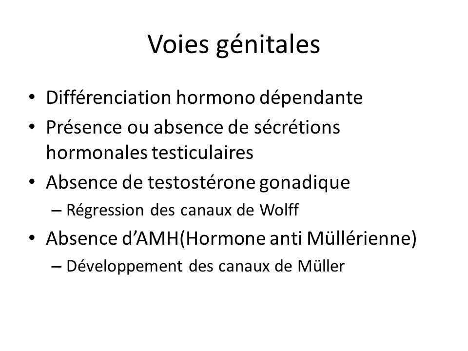 Voies génitales Différenciation hormono dépendante