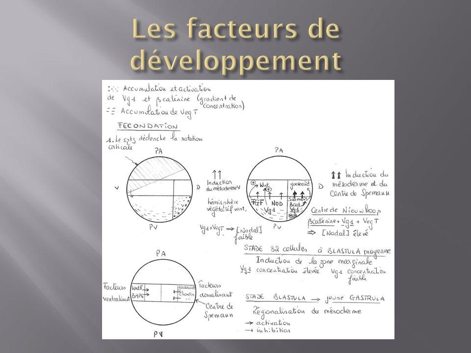 Les facteurs de développement