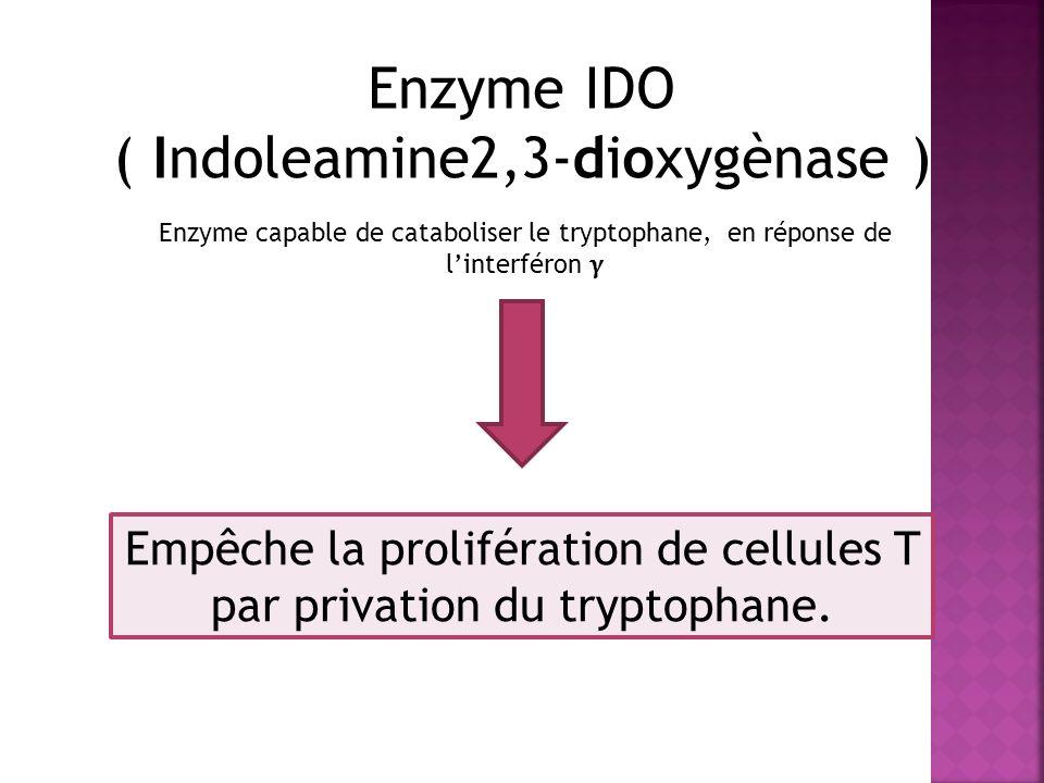 ( Indoleamine2,3-dioxygènase )