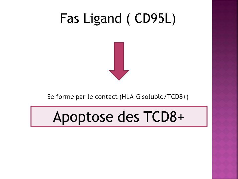 Se forme par le contact (HLA-G soluble/TCD8+)