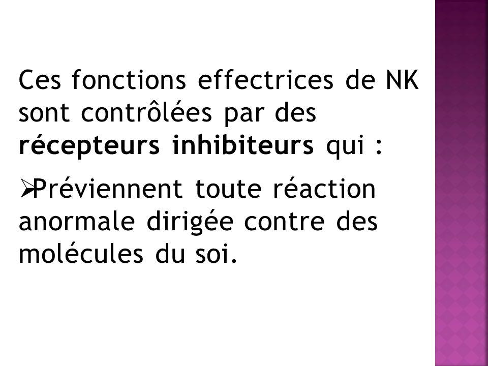 Ces fonctions effectrices de NK sont contrôlées par des récepteurs inhibiteurs qui :