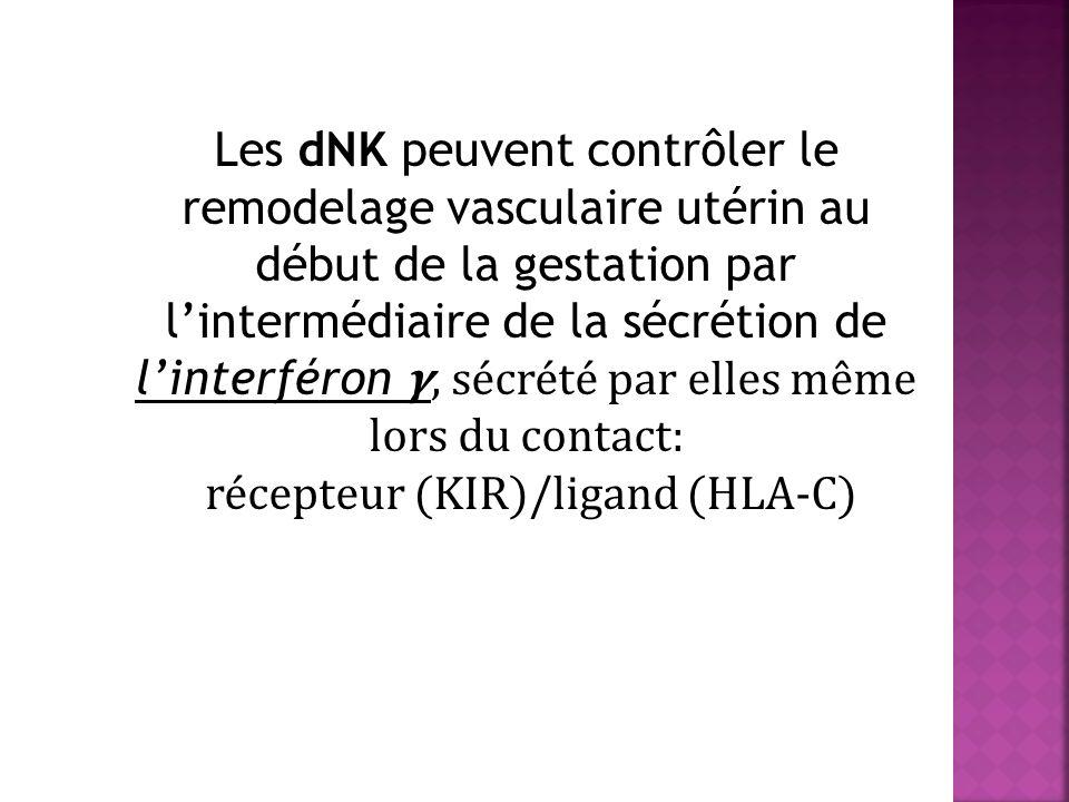 récepteur (KIR)/ligand (HLA-C)