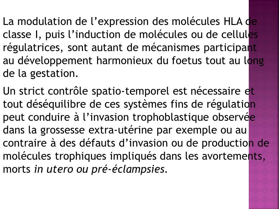 La modulation de l'expression des molécules HLA de classe I, puis l'induction de molécules ou de cellules régulatrices, sont autant de mécanismes participant au développement harmonieux du foetus tout au long de la gestation.