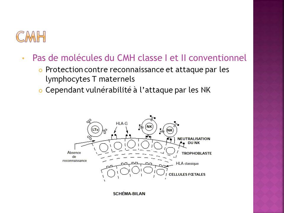 CMH Pas de molécules du CMH classe I et II conventionnel