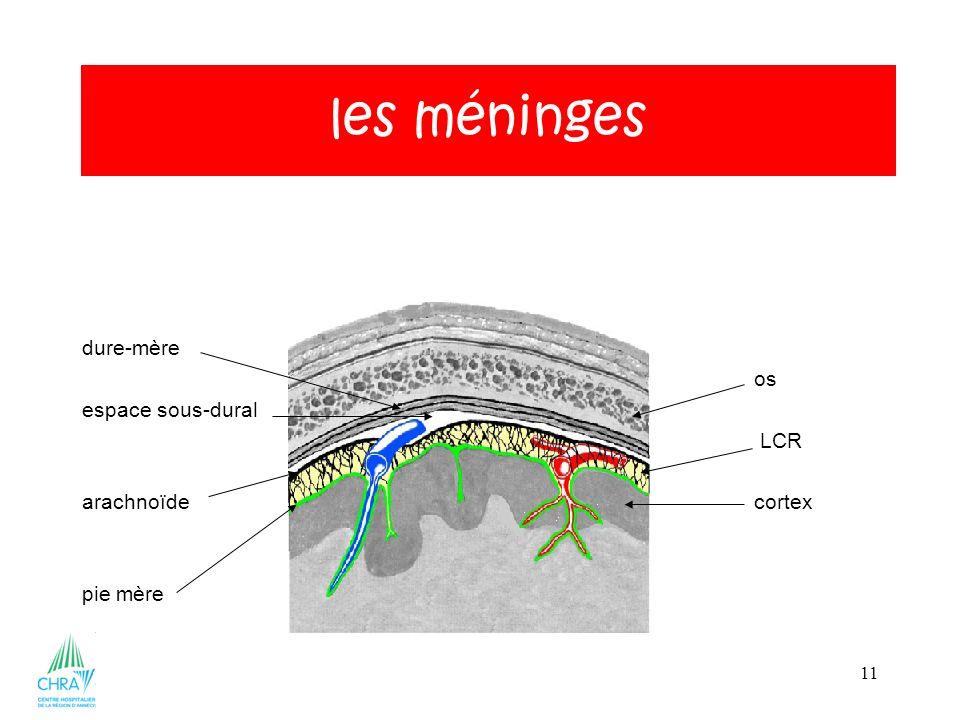 les méninges dure-mère os espace sous-dural LCR arachnoïde cortex