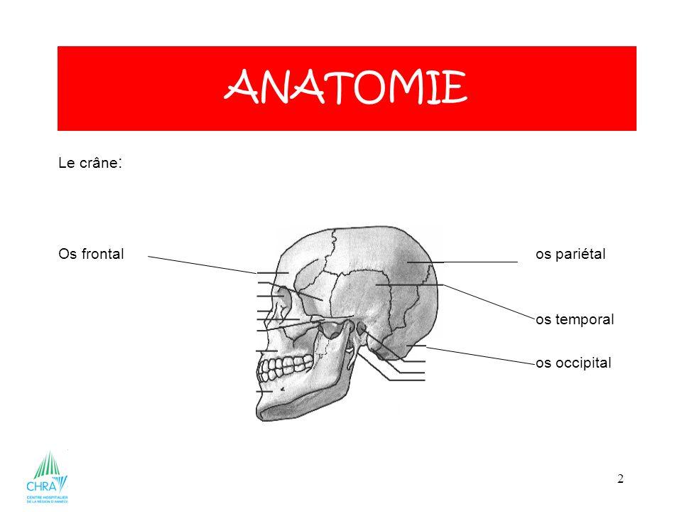 ANATOMIE Le crâne: Os frontal os pariétal os temporal os occipital