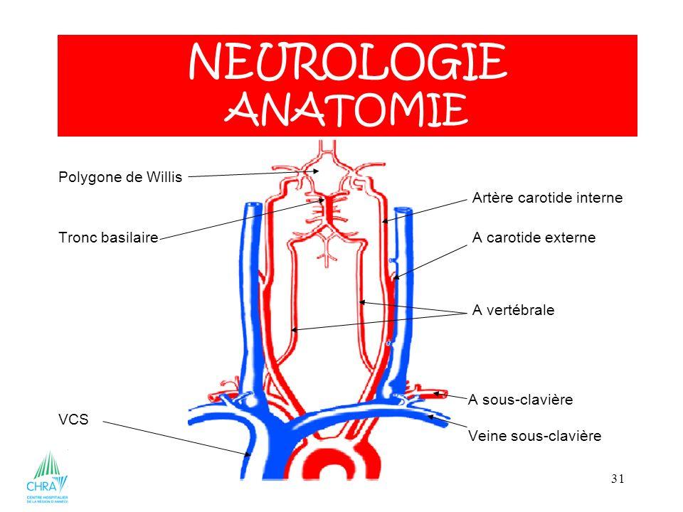 NEUROLOGIE ANATOMIE Polygone de Willis Artère carotide interne