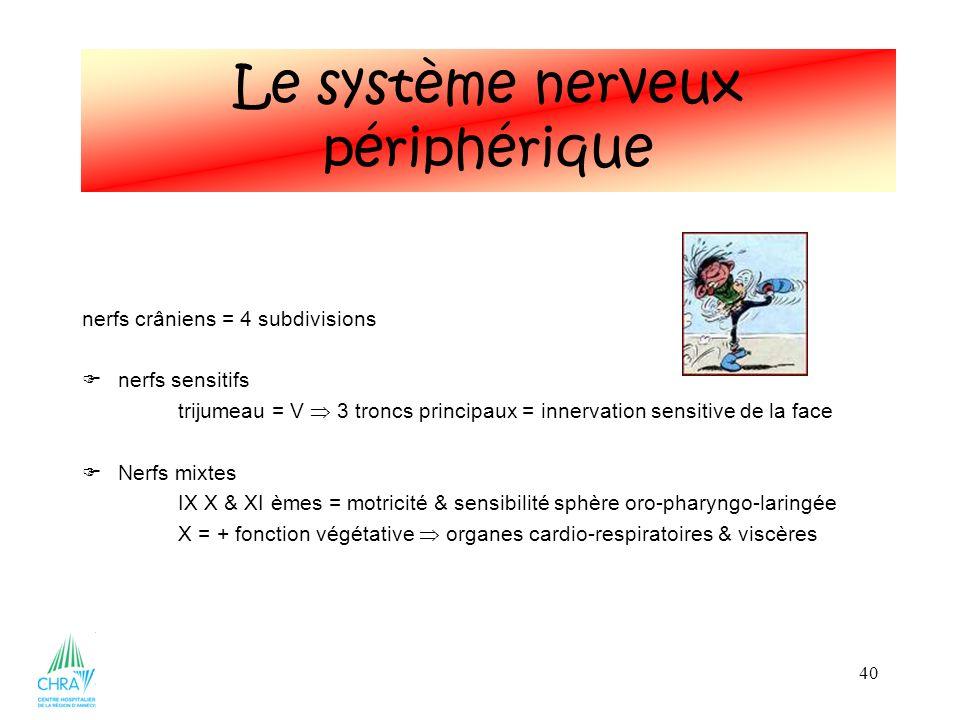 Le système nerveux périphérique