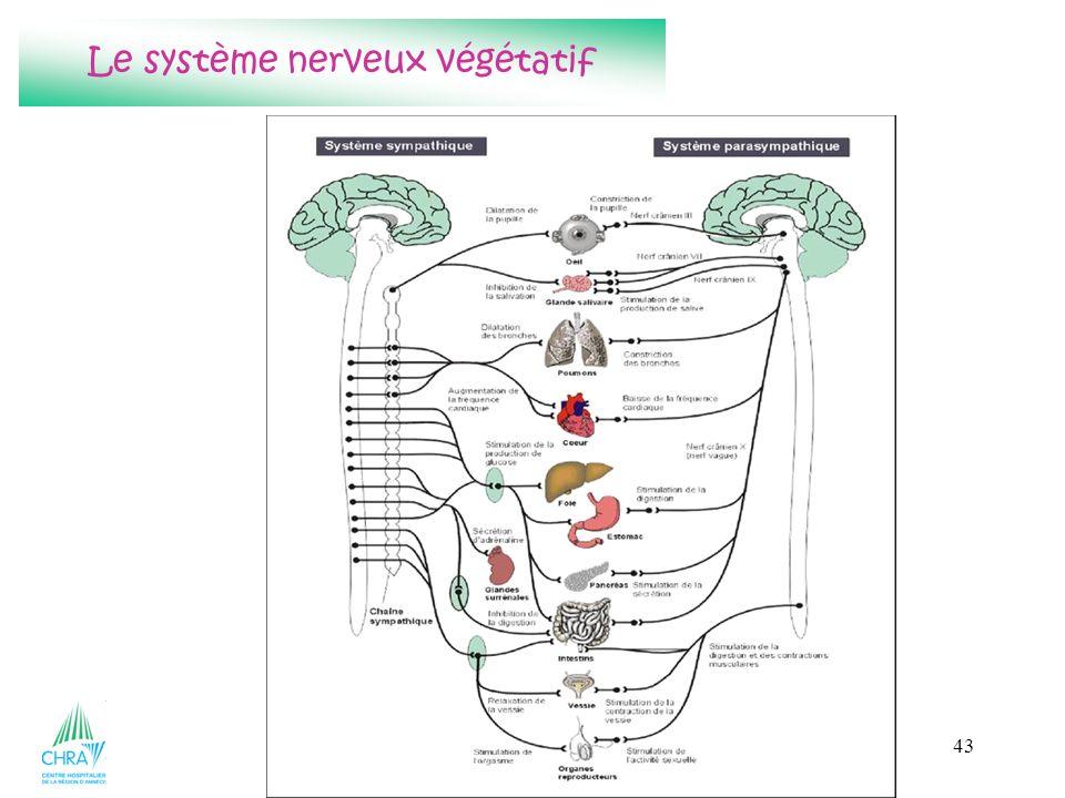 Le système nerveux végétatif