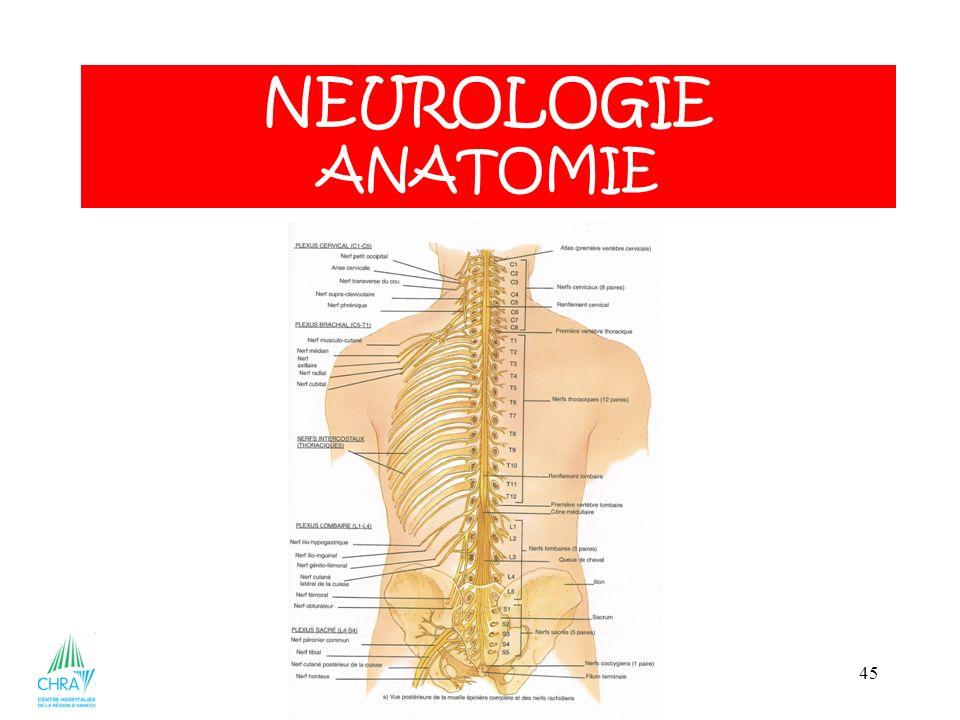 NEUROLOGIE ANATOMIE