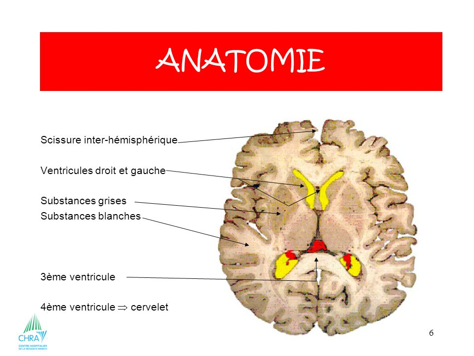 ANATOMIE Scissure inter-hémisphérique Ventricules droit et gauche