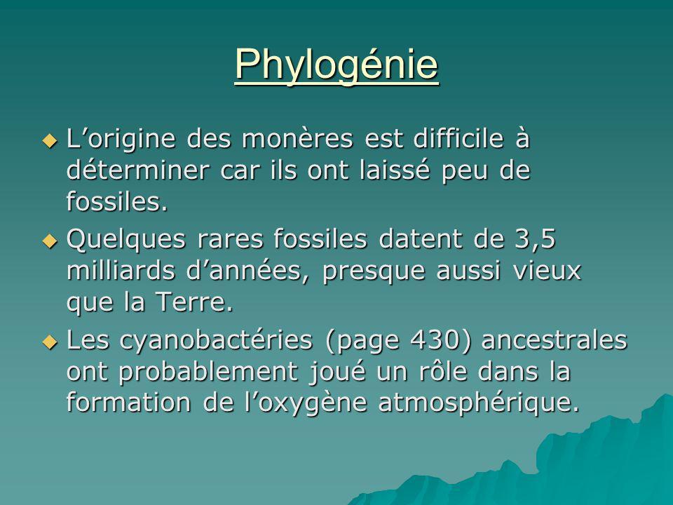 Phylogénie L'origine des monères est difficile à déterminer car ils ont laissé peu de fossiles.