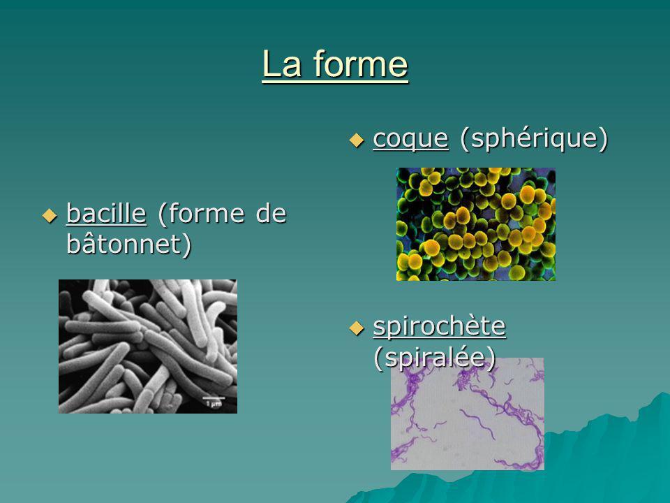 La forme coque (sphérique) bacille (forme de bâtonnet)