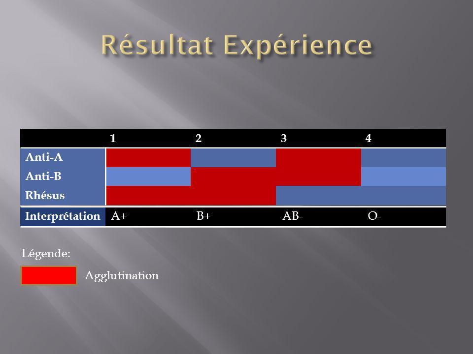 Résultat Expérience 1 2 3 4 Anti-A Anti-B Rhésus Interprétation A+ B+