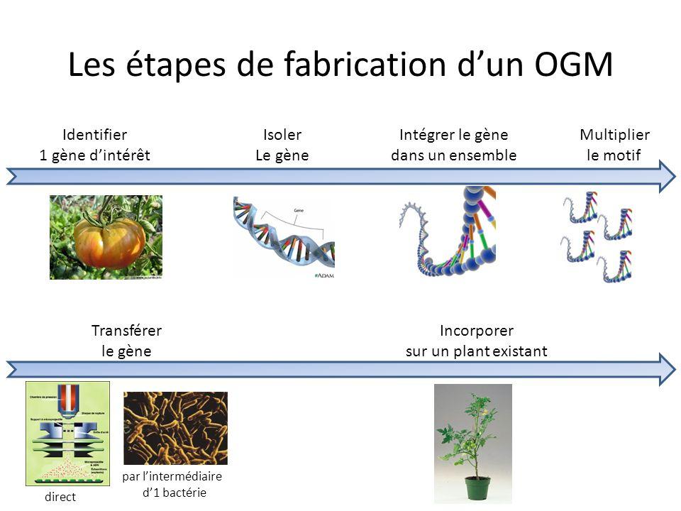 Les étapes de fabrication d'un OGM