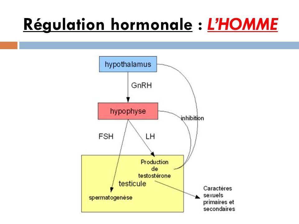 Régulation hormonale : L'HOMME