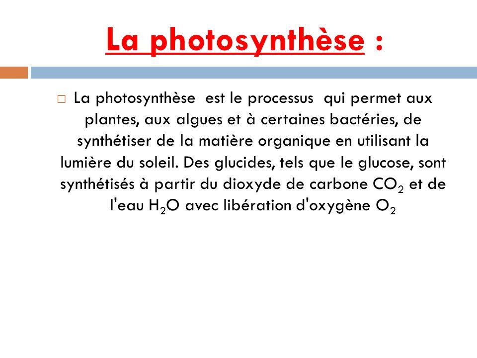 La photosynthèse :
