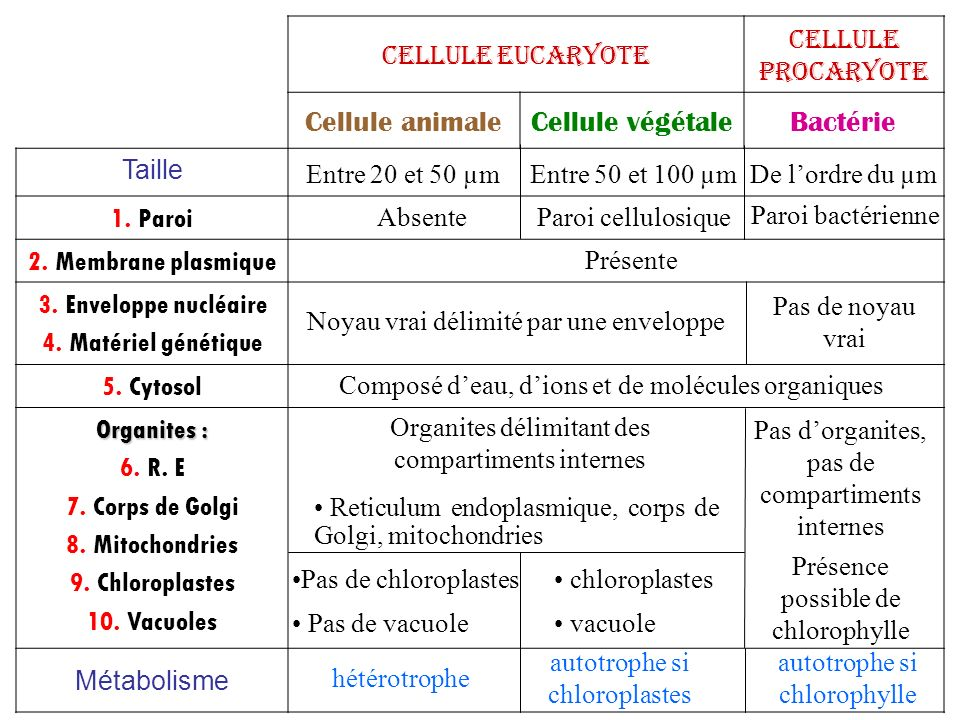Cellule animale Cellule végétale Bactérie Cellule eucaryote