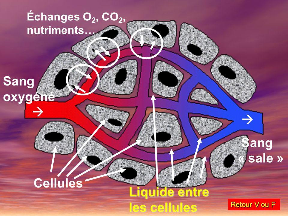 Liquide entre les cellules