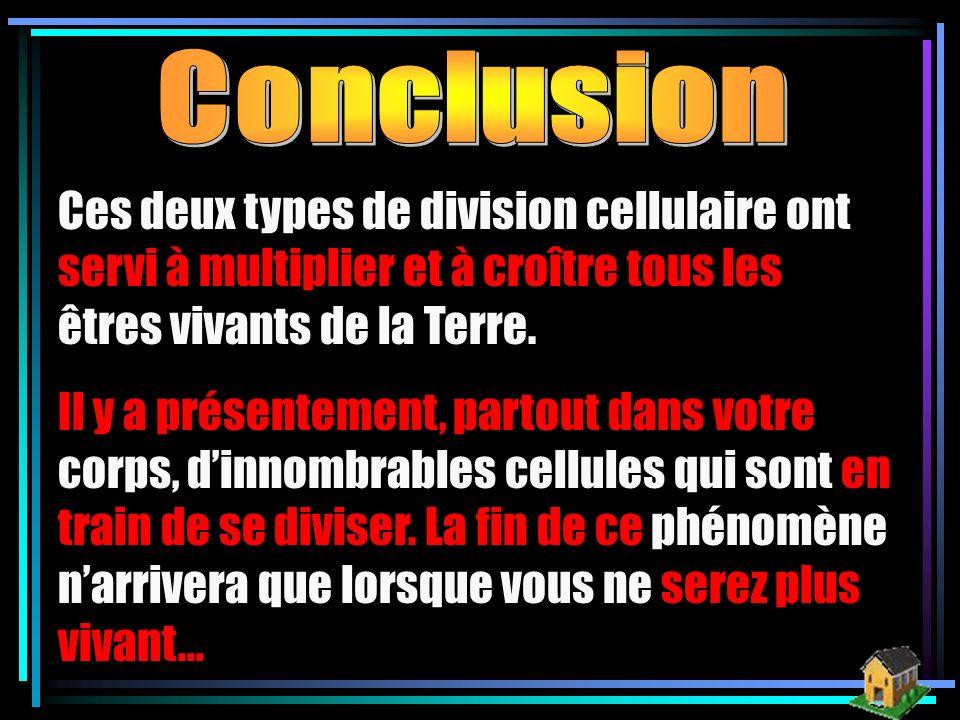 Conclusion Ces deux types de division cellulaire ont servi à multiplier et à croître tous les êtres vivants de la Terre.