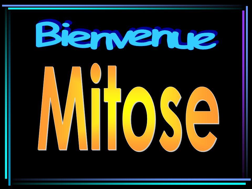 Bienvenue Mitose
