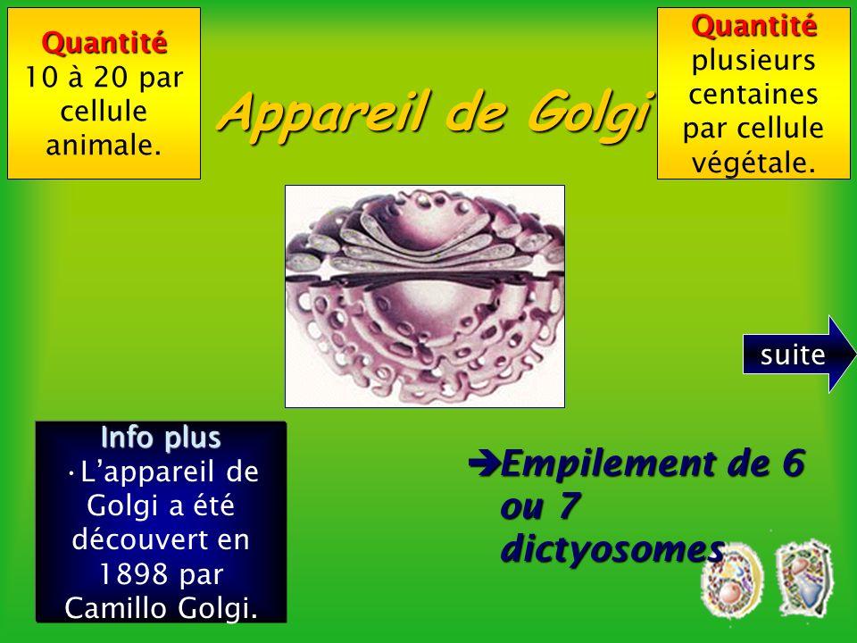 Appareil de Golgi Empilement de 6 ou 7 dictyosomes Quantité Quantité