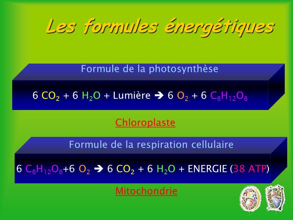 Les formules énergétiques