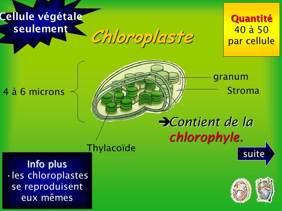 les chloroplastes se reproduisent eux mêmes