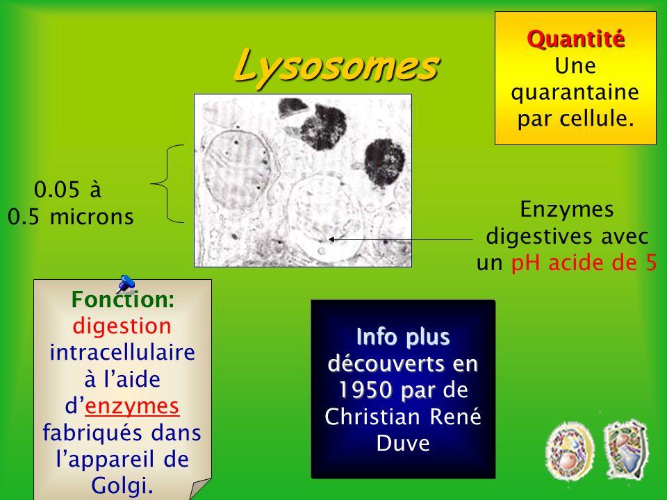 Lysosomes Quantité Une quarantaine par cellule. 0.05 à 0.5 microns