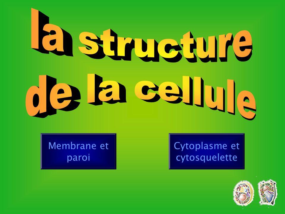Cytoplasme et cytosquelette