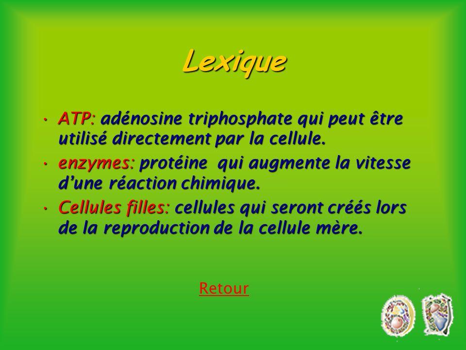 Lexique ATP: adénosine triphosphate qui peut être utilisé directement par la cellule.