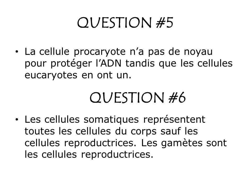QUESTION #5 La cellule procaryote n'a pas de noyau pour protéger l'ADN tandis que les cellules eucaryotes en ont un.