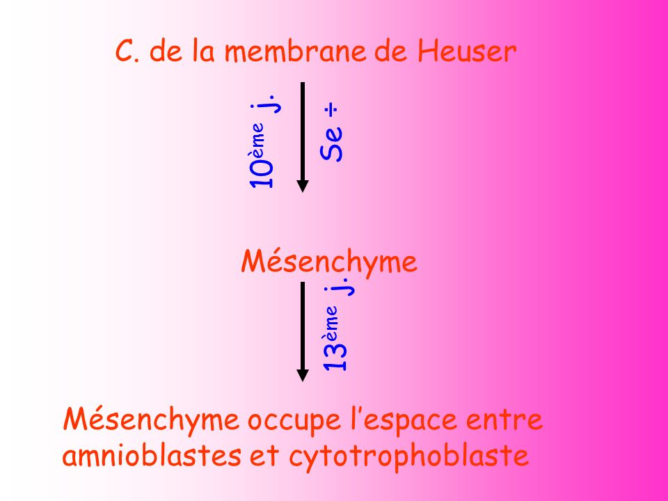 C. de la membrane de Heuser