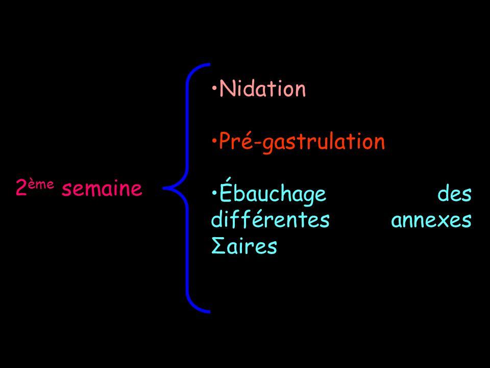 Nidation Pré-gastrulation Ébauchage des différentes annexes Σaires 2ème semaine