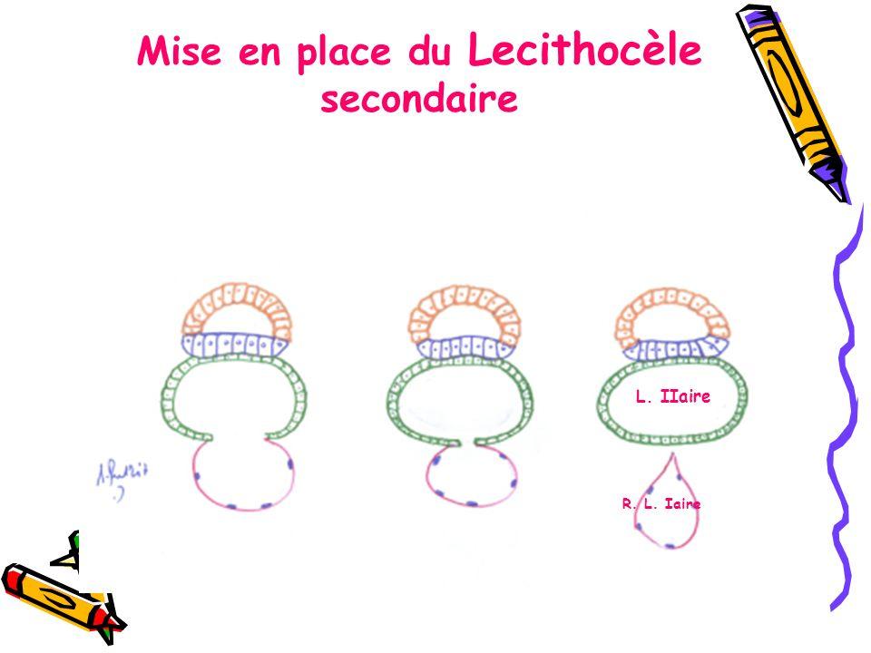 Mise en place du Lecithocèle secondaire