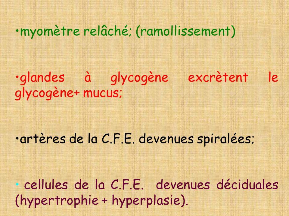 myomètre relâché; (ramollissement)