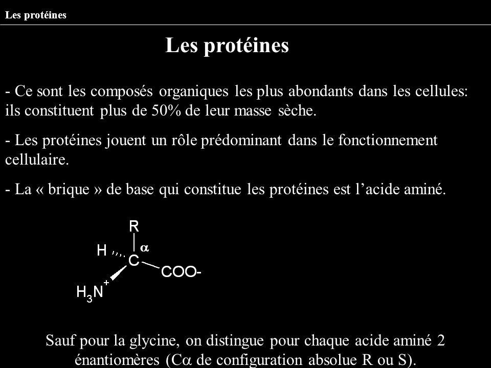 Les protéines Les protéines.