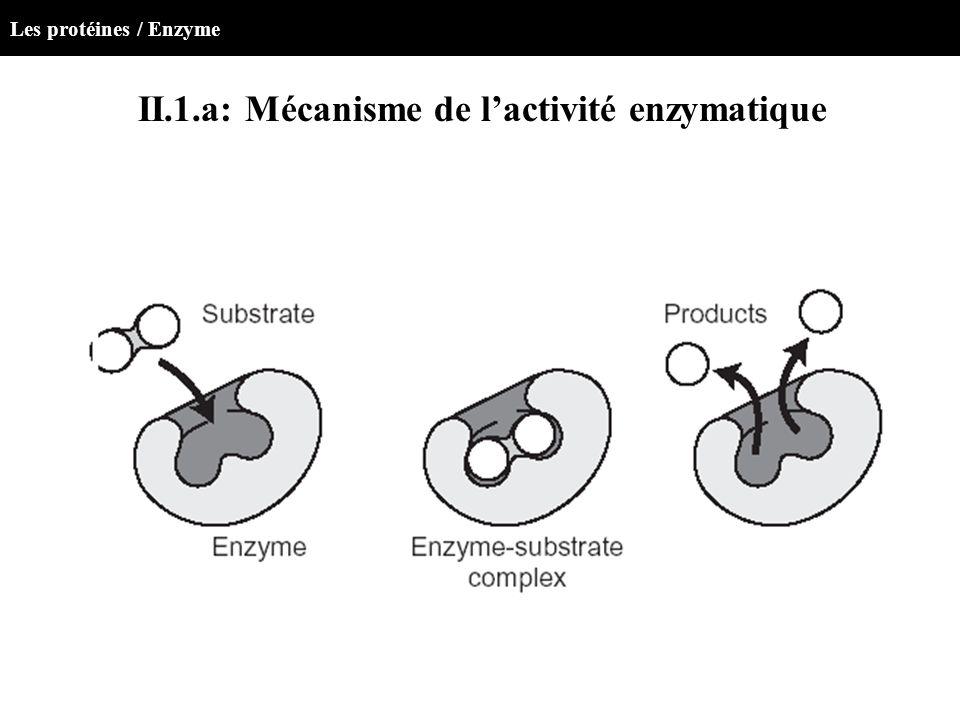 II.1.a: Mécanisme de l'activité enzymatique