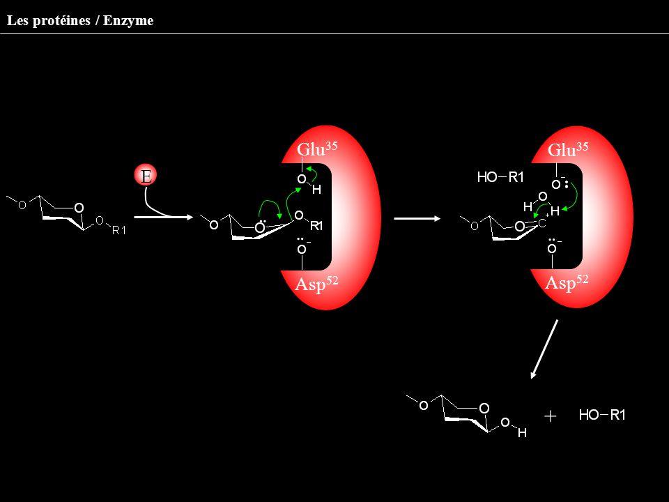 ¨ ¨ ¨ ¨ + Glu35 Glu35 E Milieu environnant Asp52 Asp52