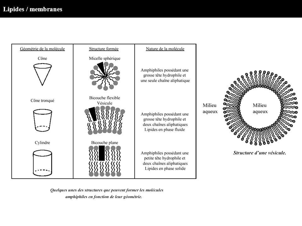 Lipides / membranes