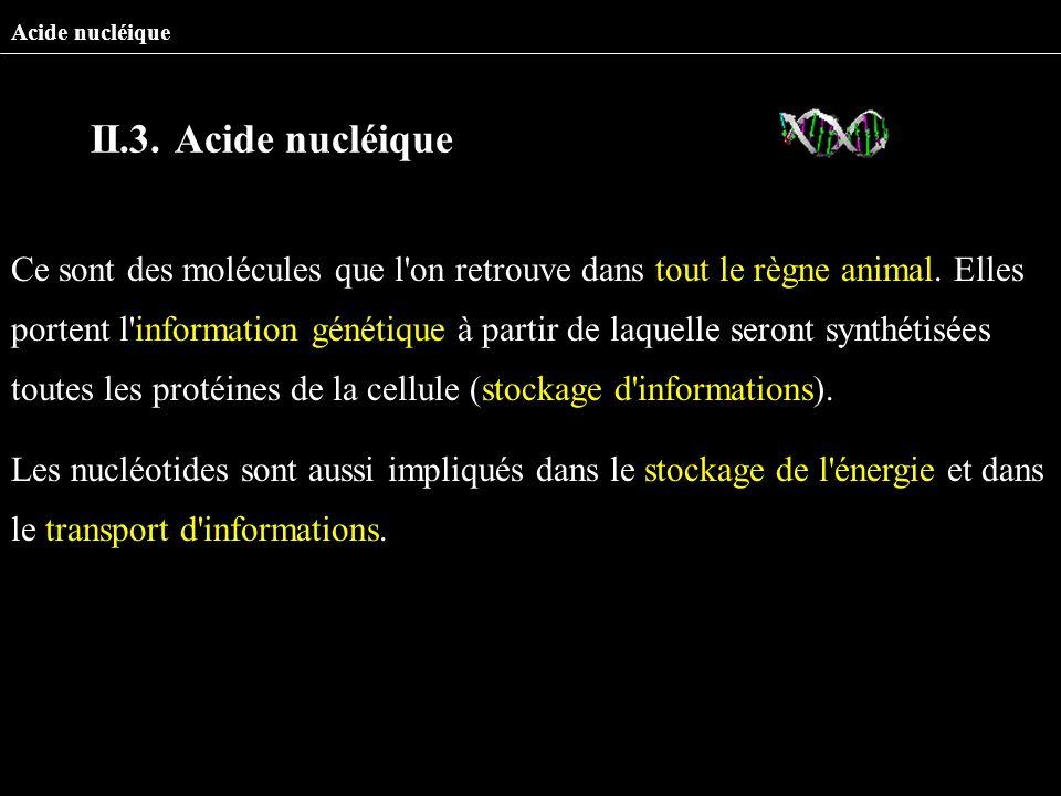 Acide nucléique II.3. Acide nucléique.