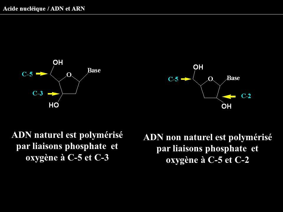 Acide nucléique / ADN et ARN