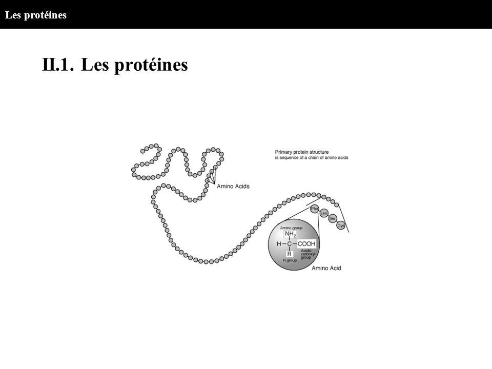 Les protéines II.1. Les protéines