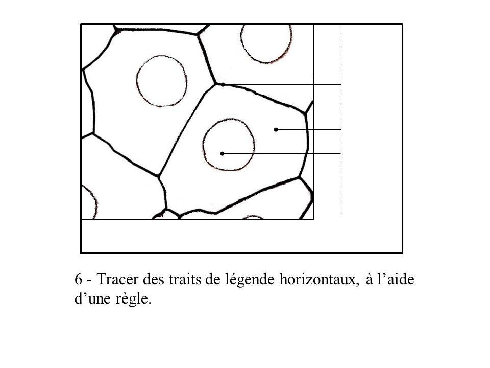 6 - Tracer des traits de légende horizontaux, à l'aide d'une règle.