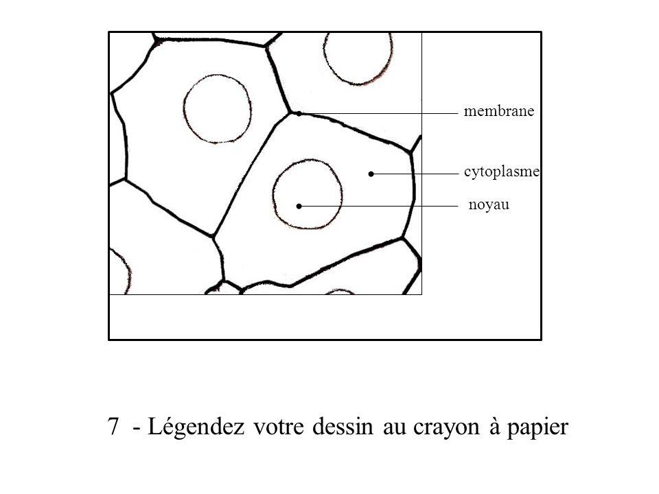 7 - Légendez votre dessin au crayon à papier