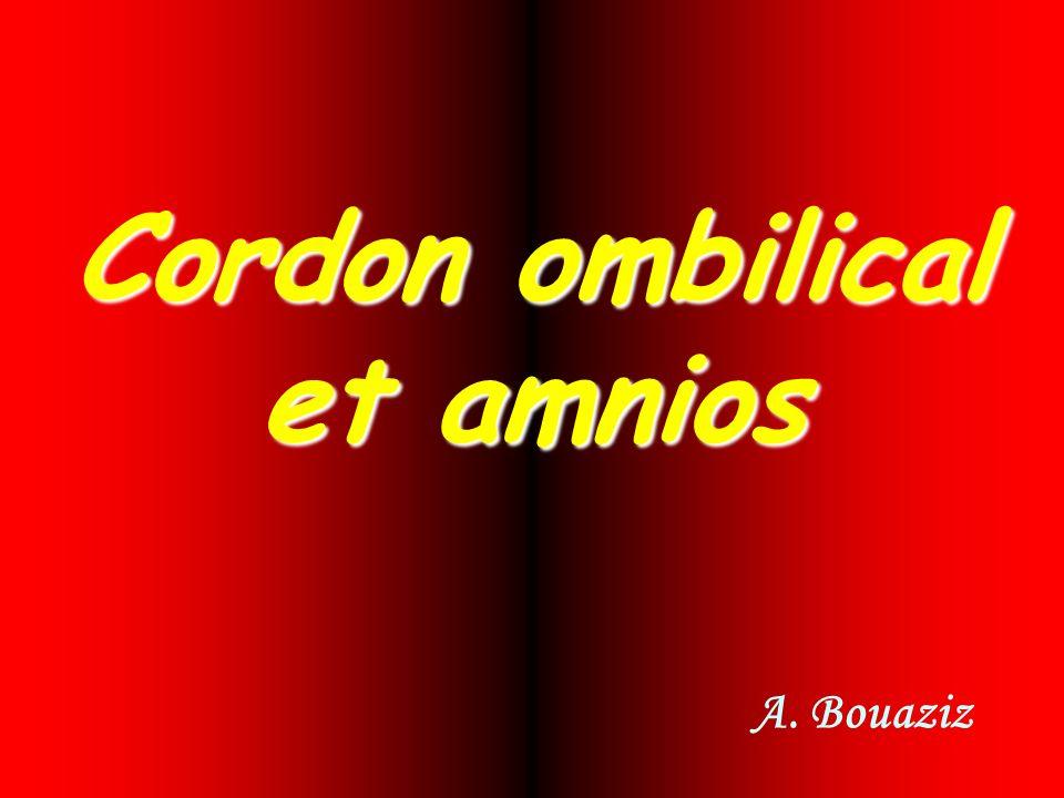 Cordon ombilical et amnios