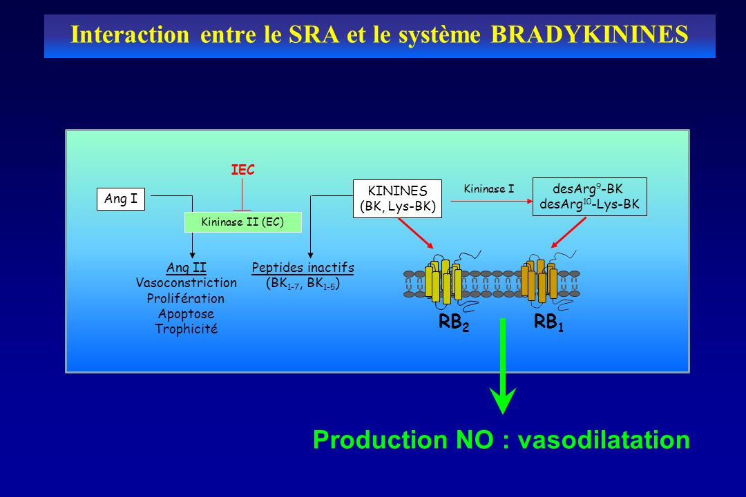 Interaction entre le SRA et le système BRADYKININES