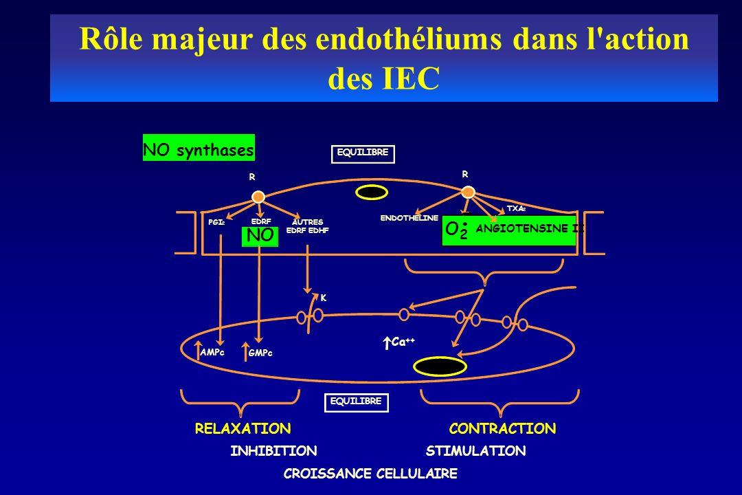 Rôle majeur des endothéliums dans l action des IEC