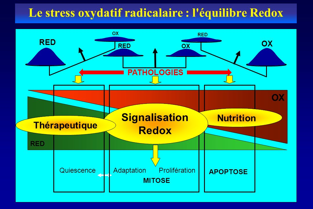 Le stress oxydatif radicalaire : l équilibre Redox