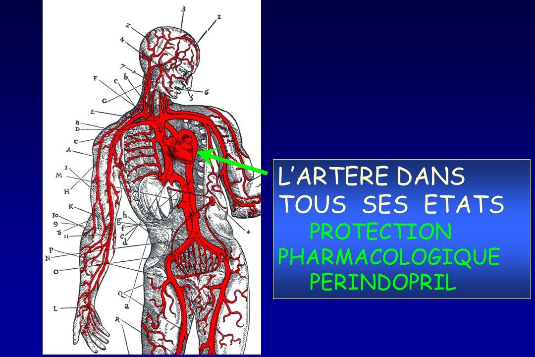 L'ARTERE DANS TOUS SES ETATS